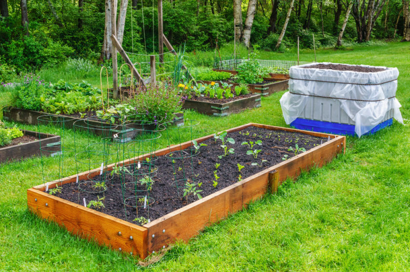 Как спланировать расположение грядок, деревьев и кустарников на дачном участке