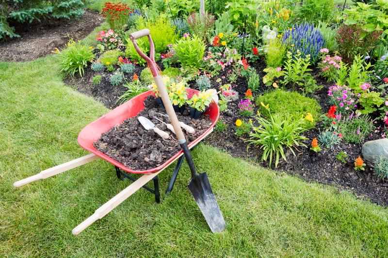 Особенности удобрения огорода в июле
