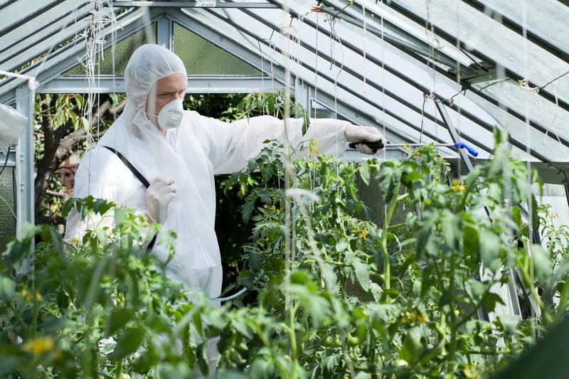 Уход за томатами в июне и июле: способы добиться высокой урожайности и уберечь растения от вредителей и болезней