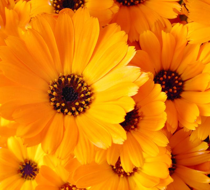 Какие цветы оптимально подходят для высаживания на кладбище. Критерии выбора