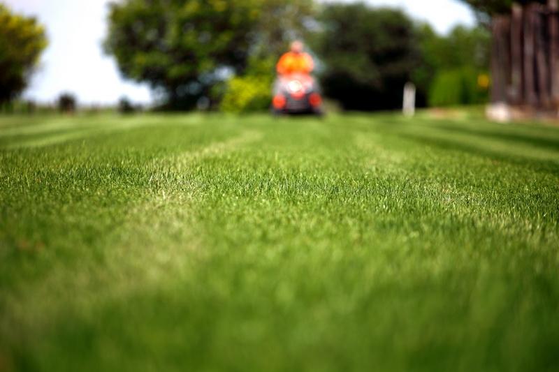 Идеальный газон. Хочется на своем участке создать газон мечты — соблюдайте основные правила, и мечта обязательно сбудется