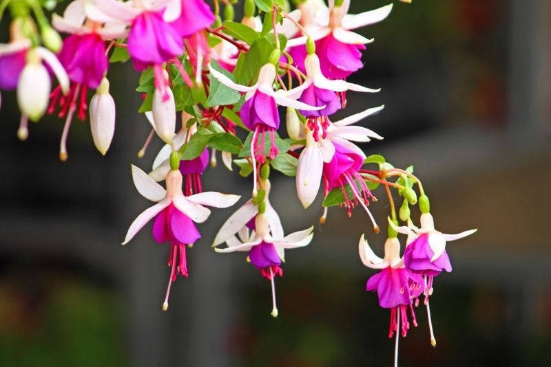 Топ-10 регулярно цветущих неприхотливых домашних растений