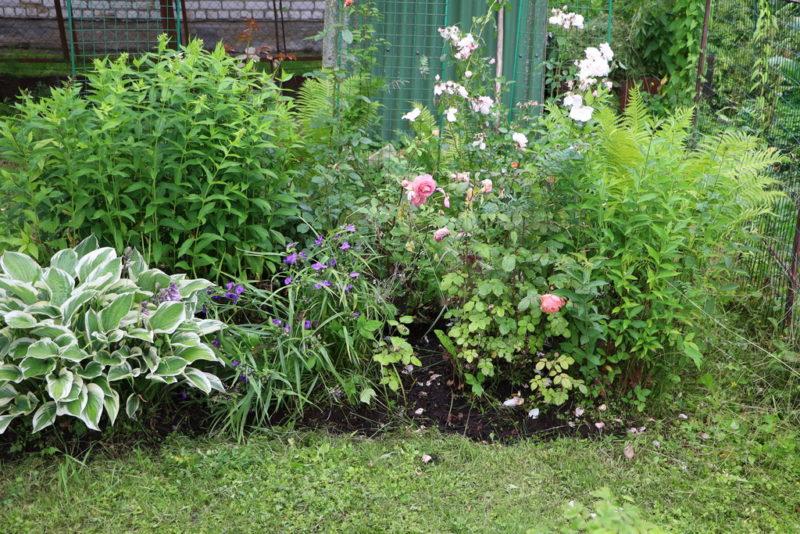 Создаем чудесный сад с минимальными затратами усилий