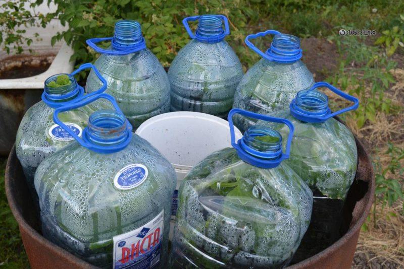 Рассада огурцов, растущая в 5-литровых бутылях, — раскрываем секреты мастерства