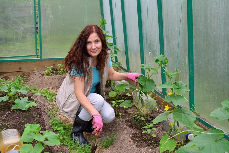 Спасаем урожай огурцов от паутинного клеща проверенными способами