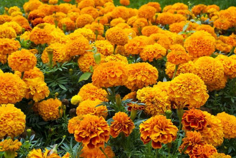 Какие культуры и сорта я всегда высеваю под зиму и собираю отличные урожаи намного раньше