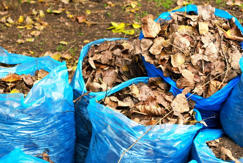 Почему я всегда убираю опавшую листву с грядок и цветников. раньше оставлял и сталкивался с проблемами