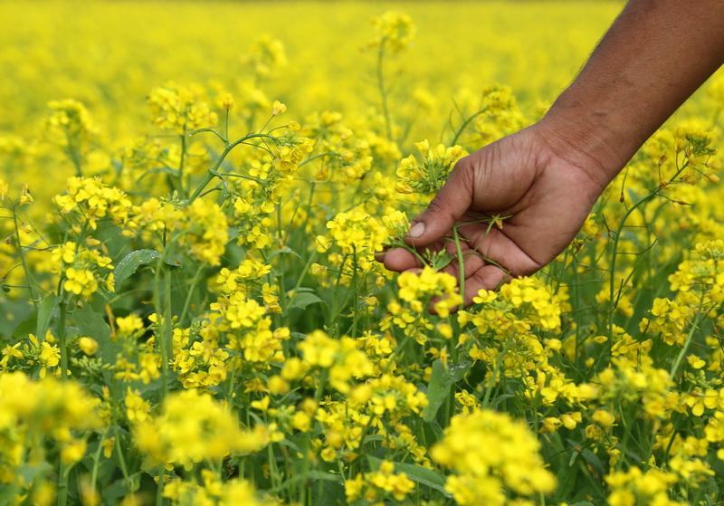 Удобрение от природы для ваших грядок — выращивание сидератов осенью