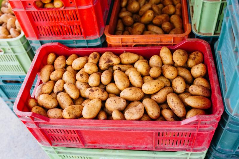Как сохранить картошечку свежей и вкусной до нового урожая — разбираем основные правила удачной зимовки для «второго хлеба»