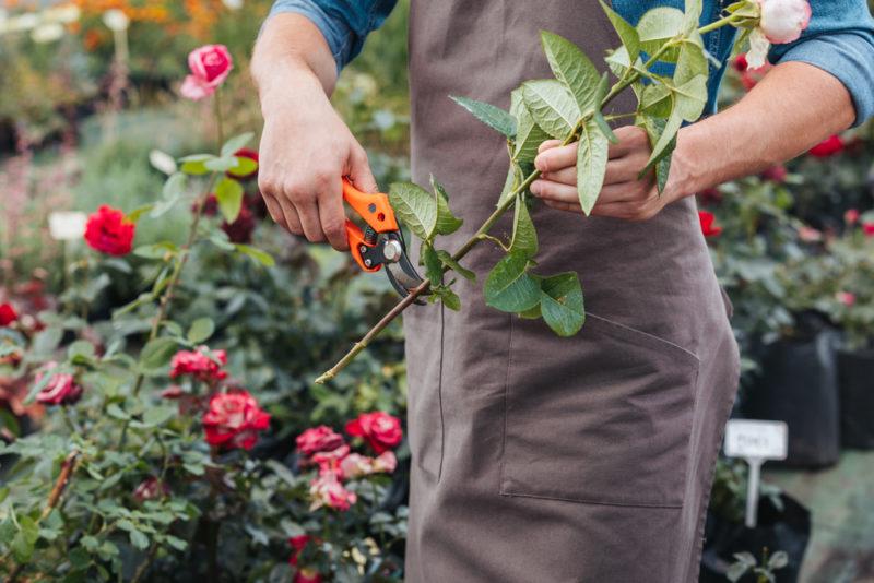 Как я правильно готовлю свои розы к зиме — полезные советы, которые помогут вашему розарию сохранить здоровье и красоту