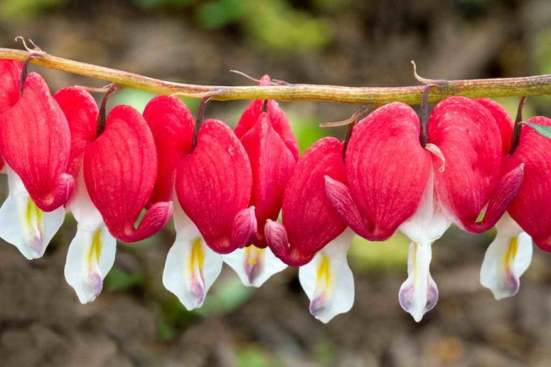 15 многолетних цветов, которые я сажаю и пересаживаю осенью. Рассказываю про тонкости процедуры для каждого из них