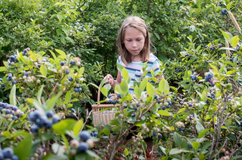 Чем необходимо осенью обработать ягодные кустарники для борьбы с болезнями и вредителями