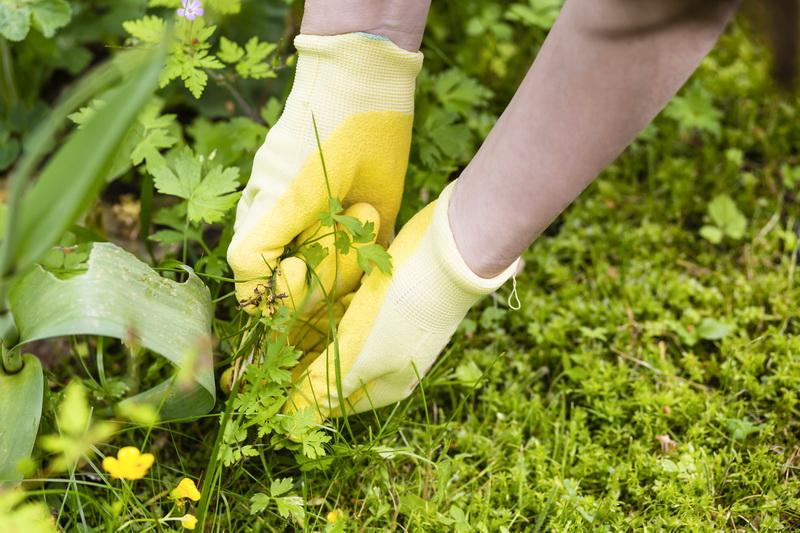 Я всегда тщательно выпалываю сорняки осенью. Рассказываю почему и как с ними необходимо бороться