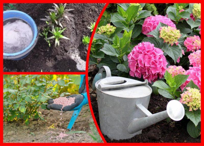 Мои советы по внесению осенних подкормок для садовых цветов