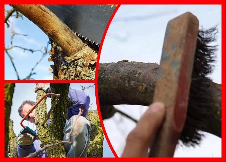 7 этапов осеннего уход за яблоней — дерево скажет вам спасибо и отлично перезимует
