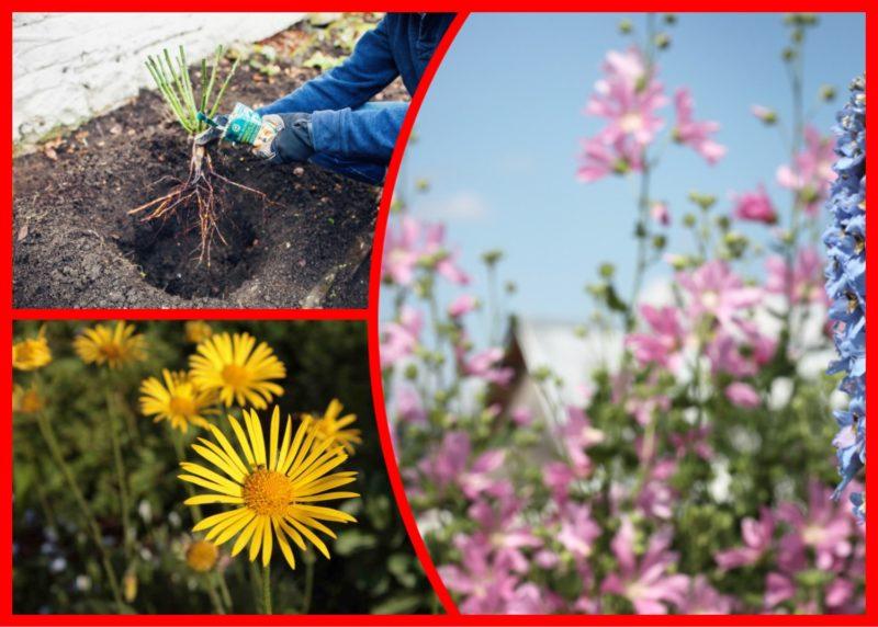Какие цветы будем сеять под зиму: правильная посадка цветов осенью